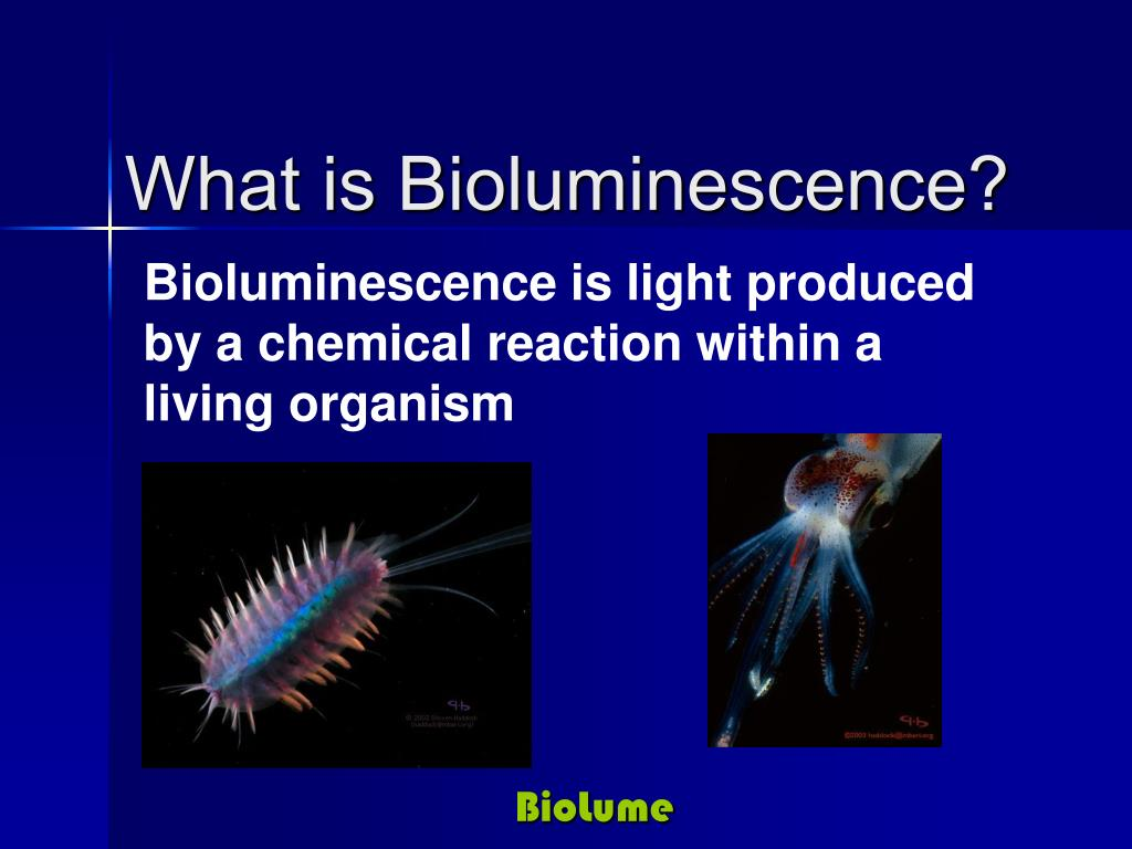 Bioluminescence is light produced by a chemical reaction within a living organism