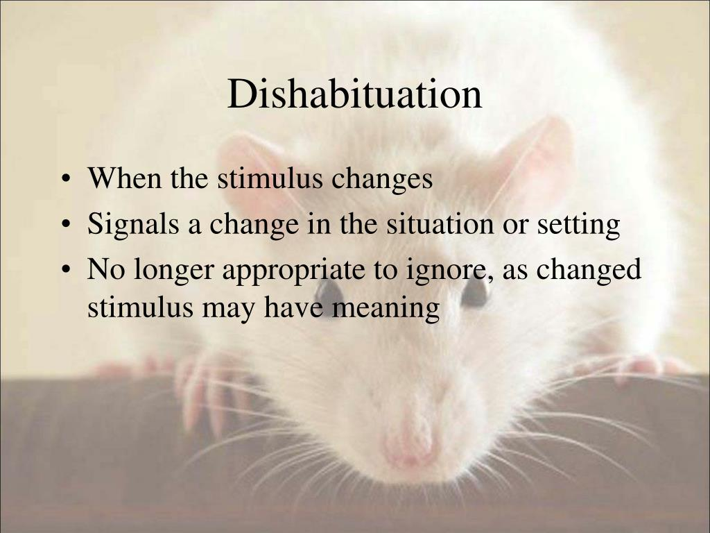 Dishabituation