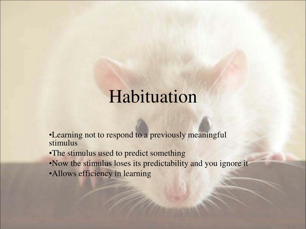 Habituation
