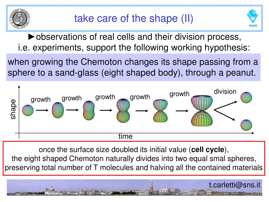 when growing the Chemoton changes its shape passing from a