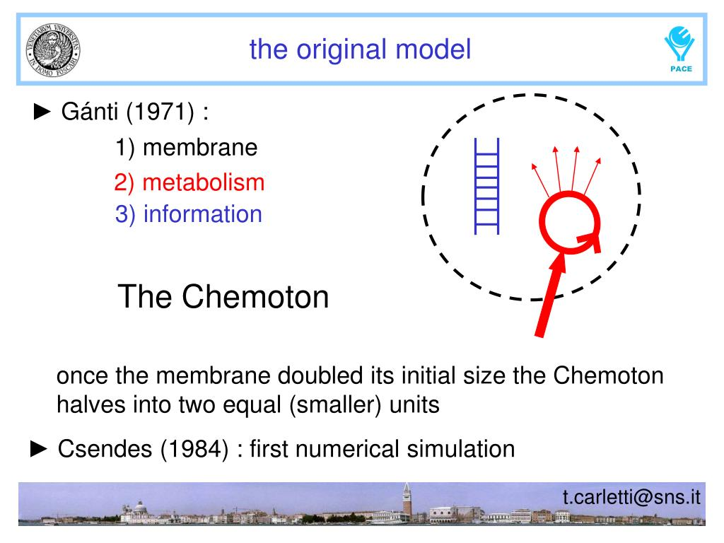 1) membrane