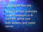 b spinal nerves