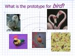what is the prototype for bird
