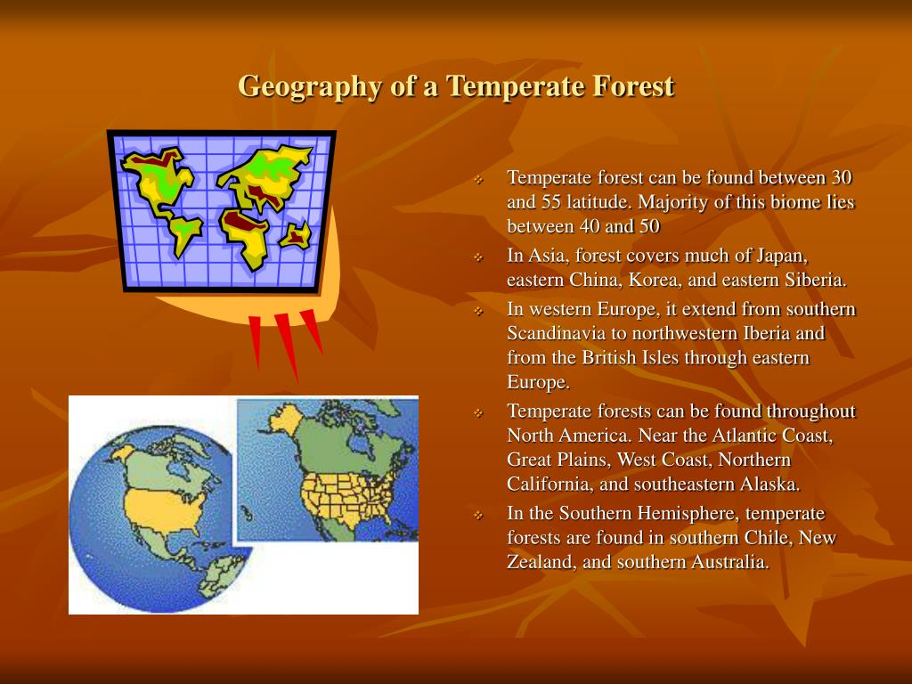 Geography of a Temperate Forest