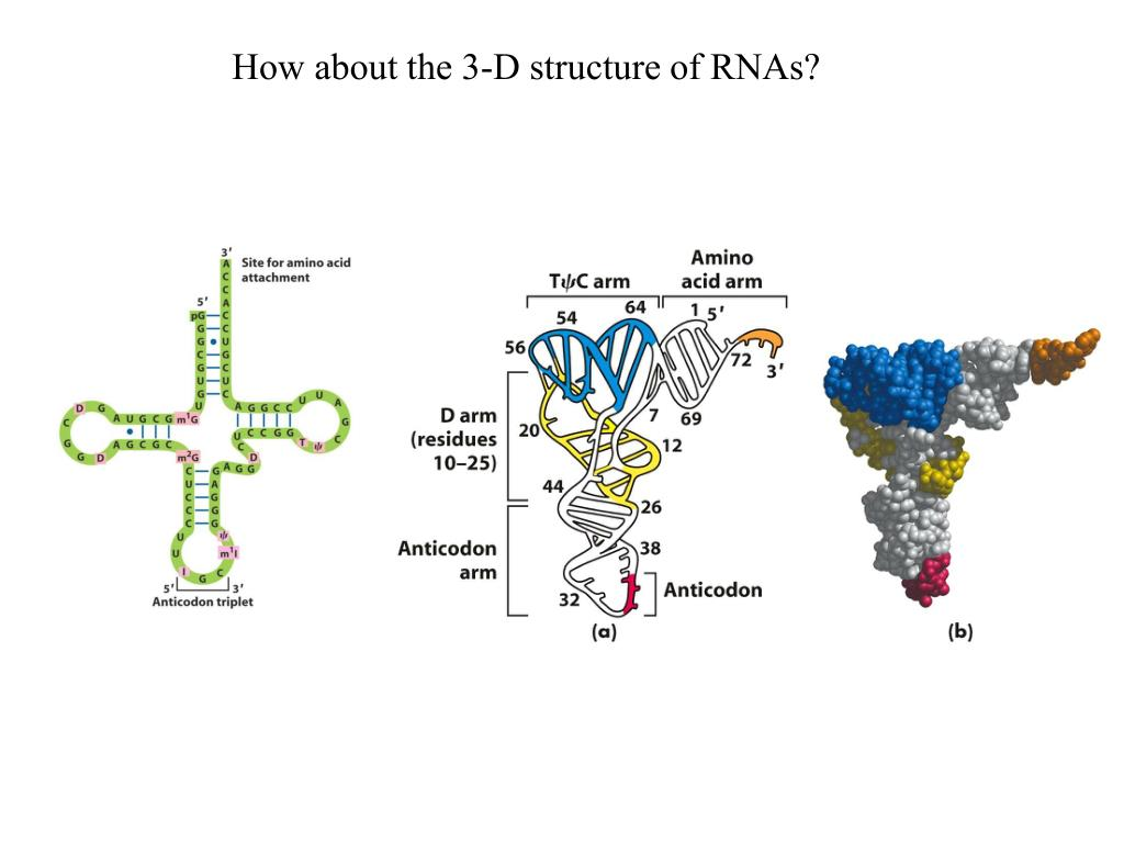 How about the 3-D structure of RNAs?