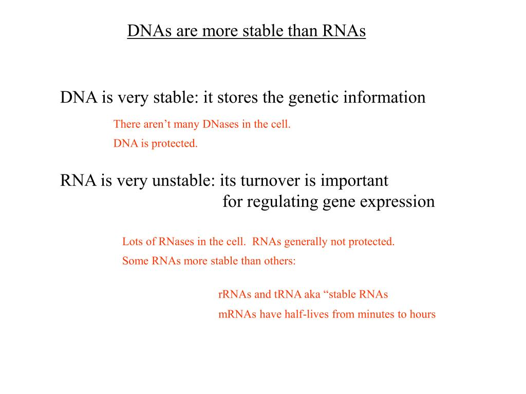 DNAs are more stable than RNAs