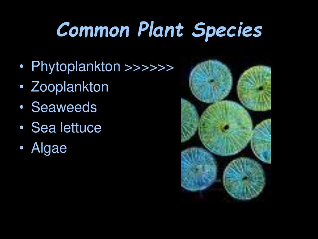 Common Plant Species