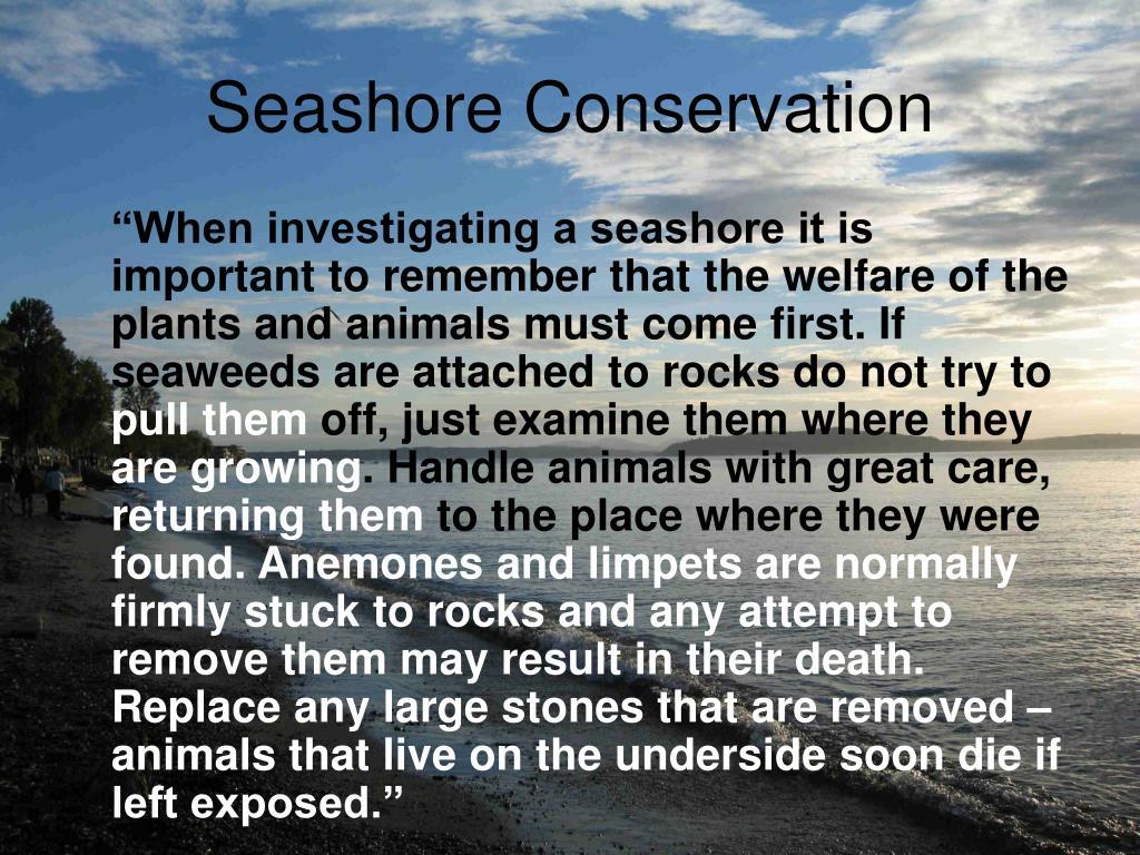 Seashore Conservation