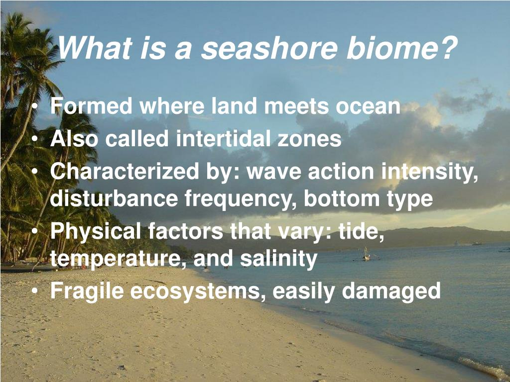 What is a seashore biome?