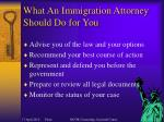 what an immigration attorney should do for you