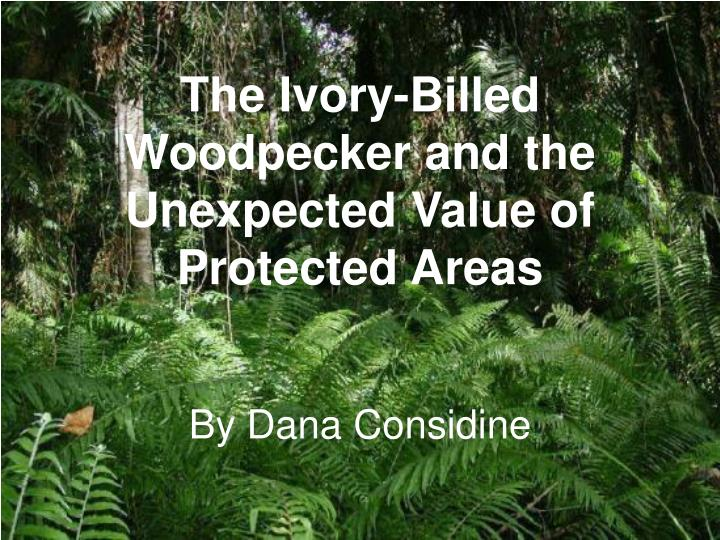 The ivory billed woodpecker and the unexpected value of protected areas