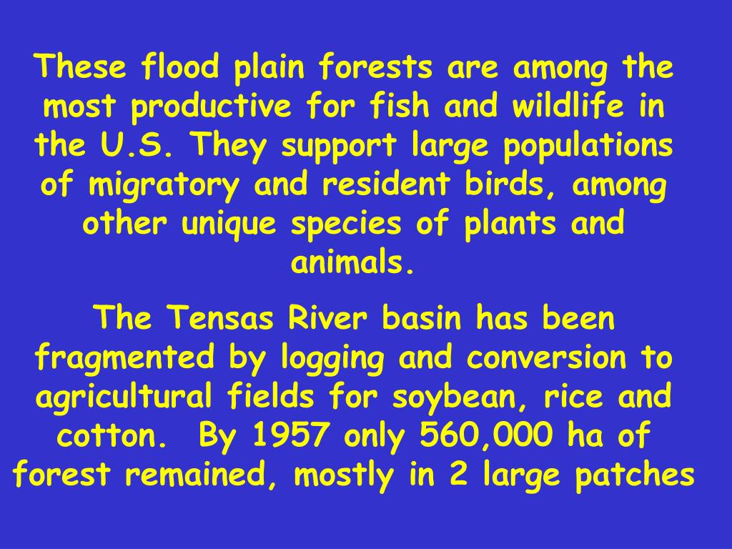 These flood plain forests are among the most productive for fish and wildlife in the U.S. They support large populations of migratory and resident birds, among other unique species of plants and animals.