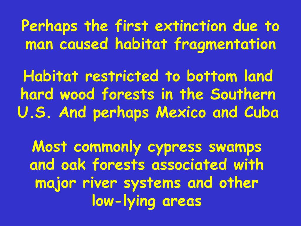 Perhaps the first extinction due to man caused habitat fragmentation