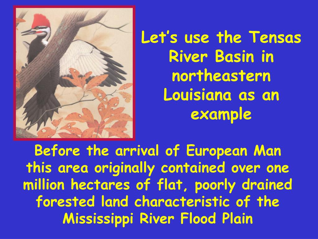 Let's use the Tensas River Basin in northeastern Louisiana as an example