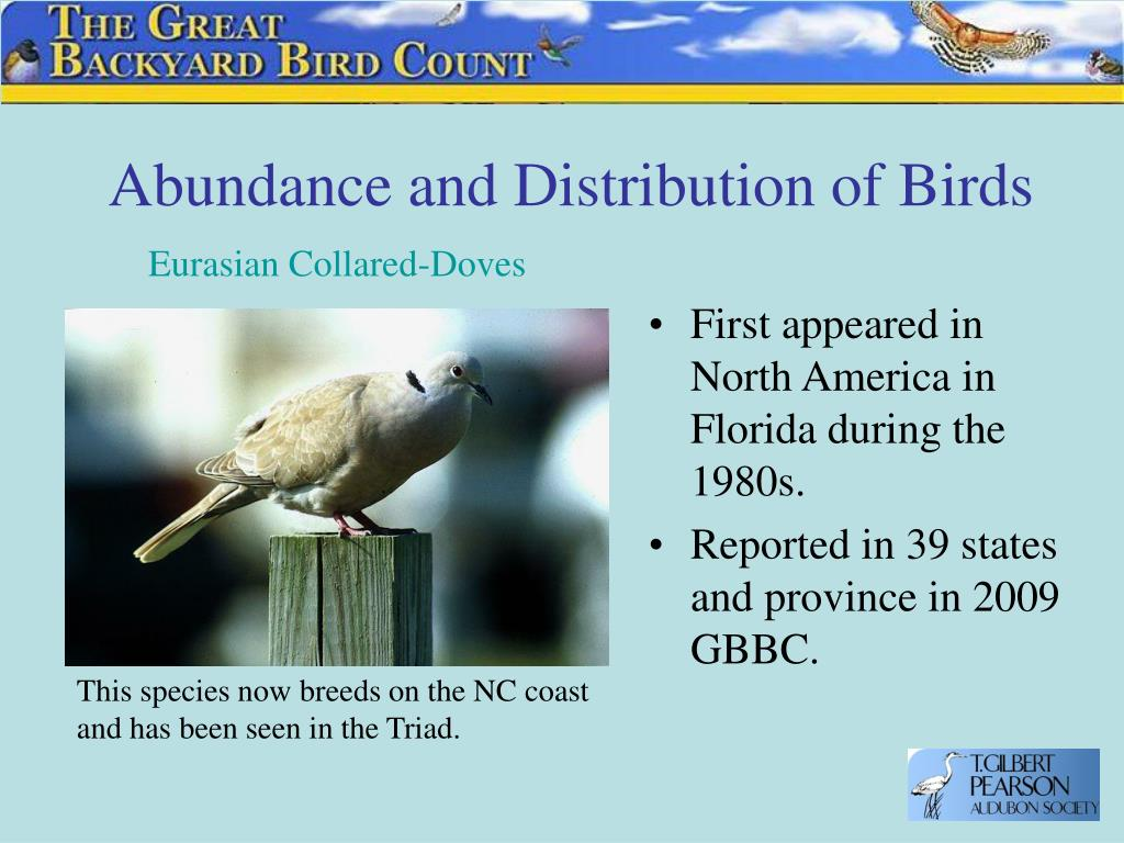 Abundance and Distribution of Birds
