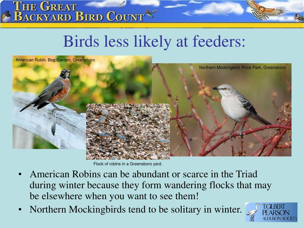 Birds less likely at feeders: