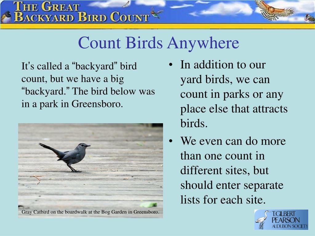 Count Birds Anywhere
