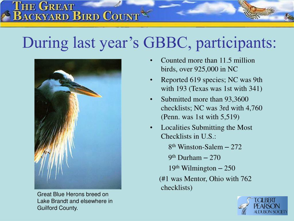 During last year's GBBC, participants: