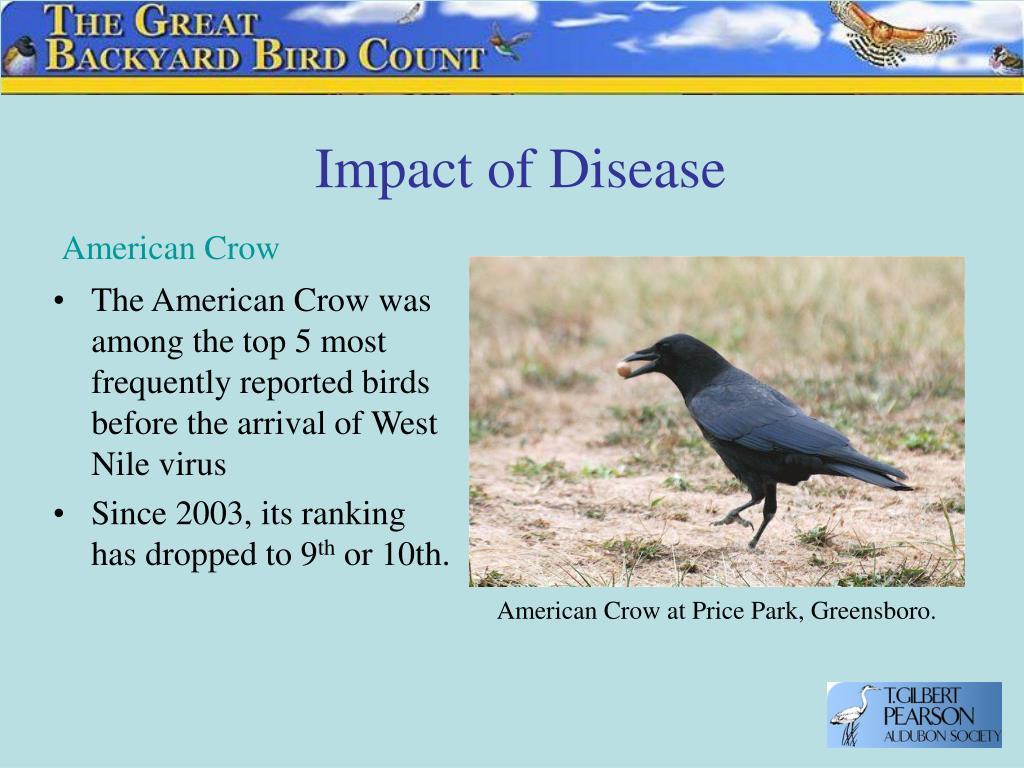 Impact of Disease