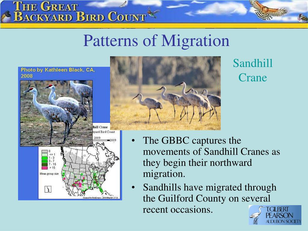 Patterns of Migration