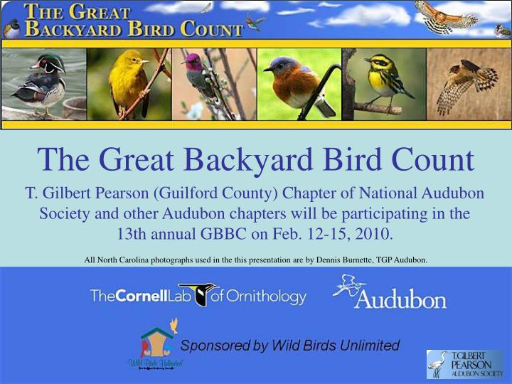 The great backyard bird count l.jpg