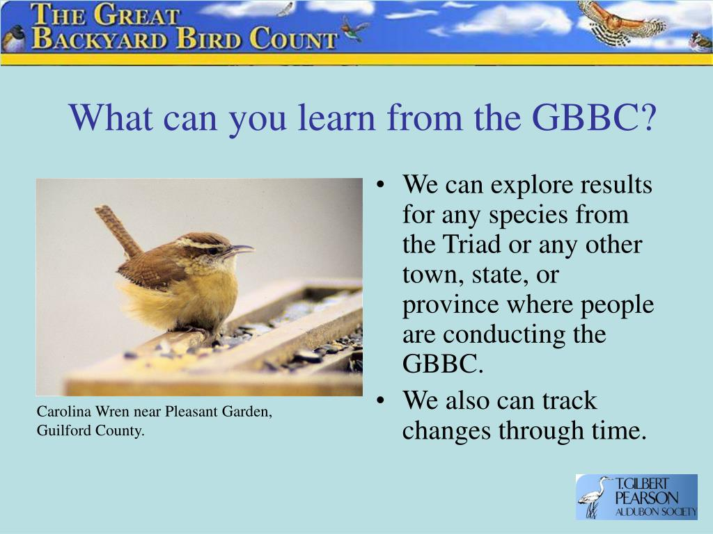 What can you learn from the GBBC?