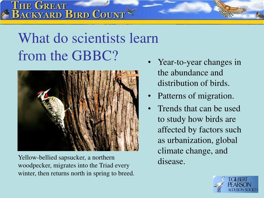 What do scientists learn from the GBBC?