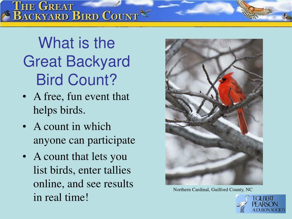 What is the Great Backyard Bird Count?