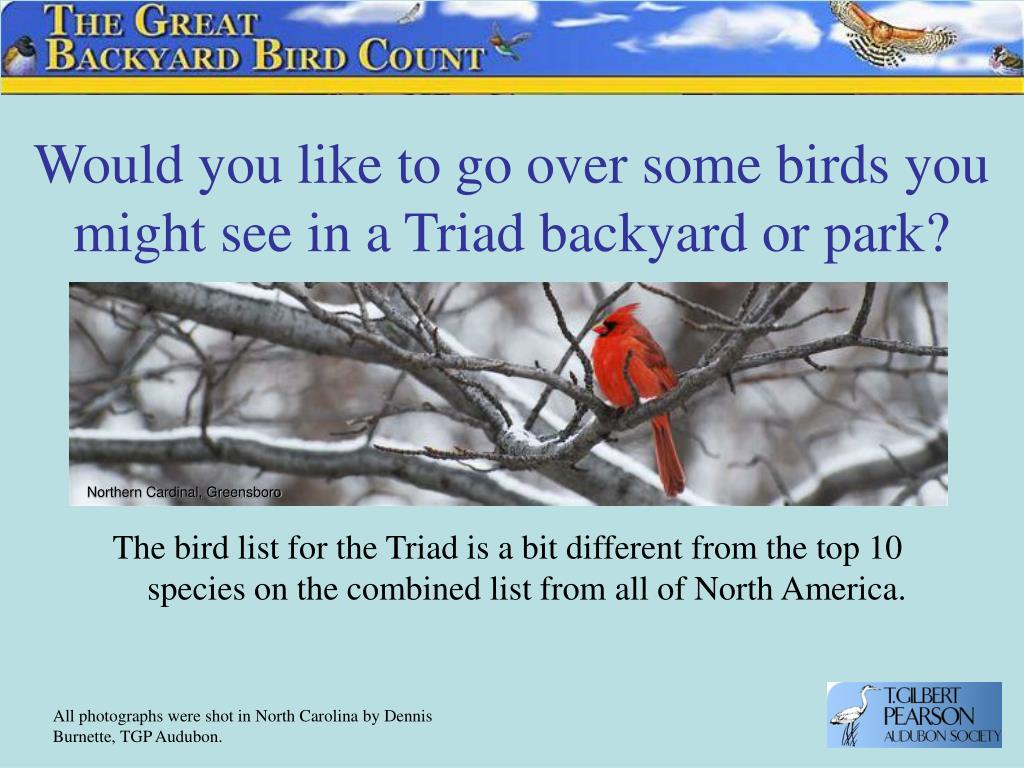 Would you like to go over some birds you might see in a Triad backyard or park?