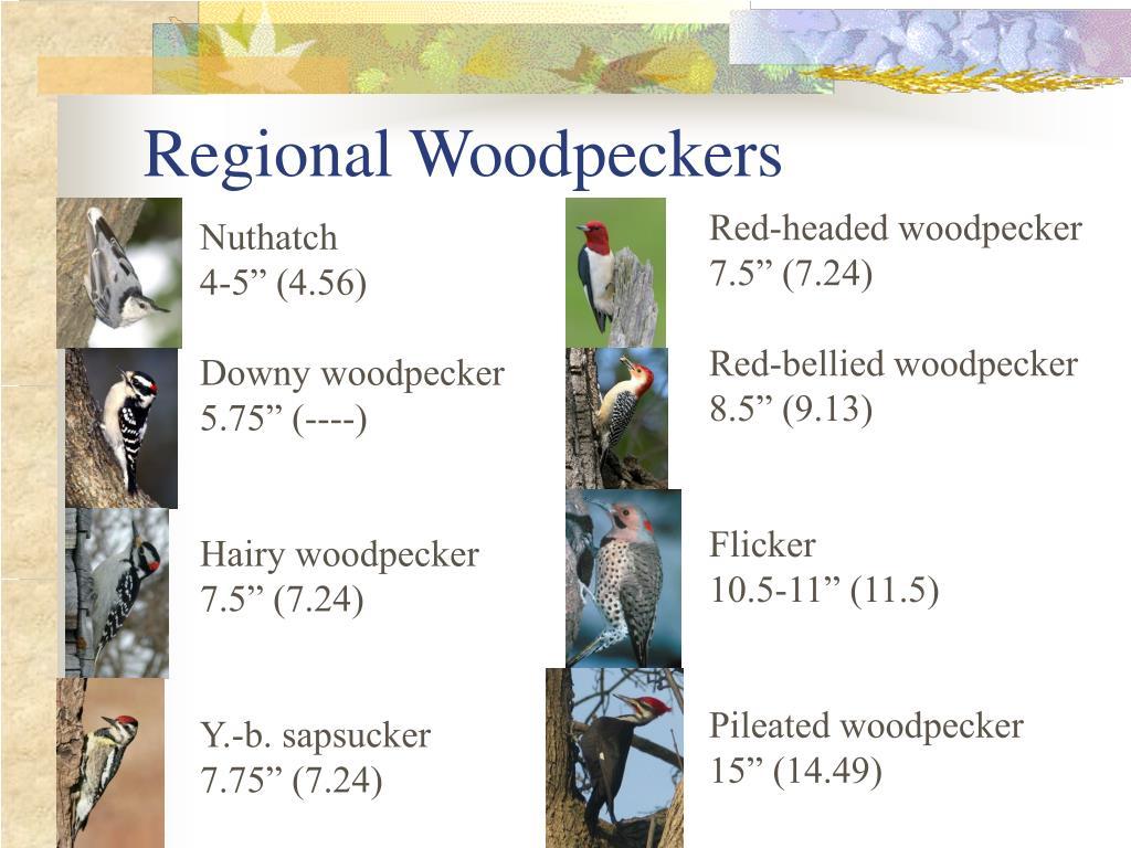 Regional Woodpeckers