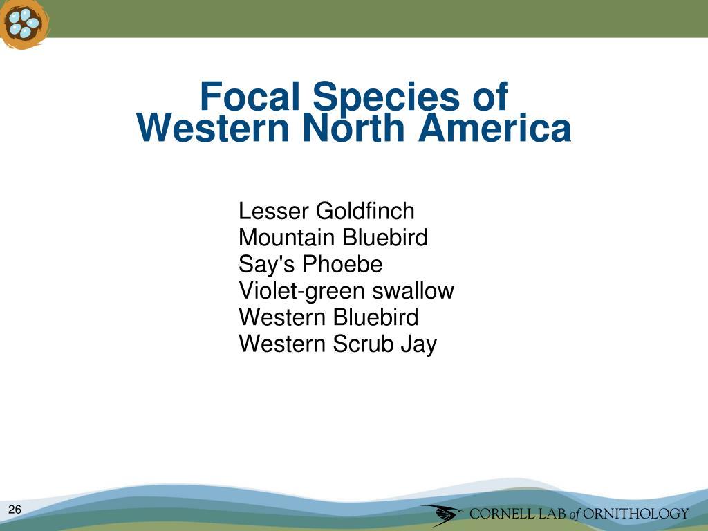 Focal Species of