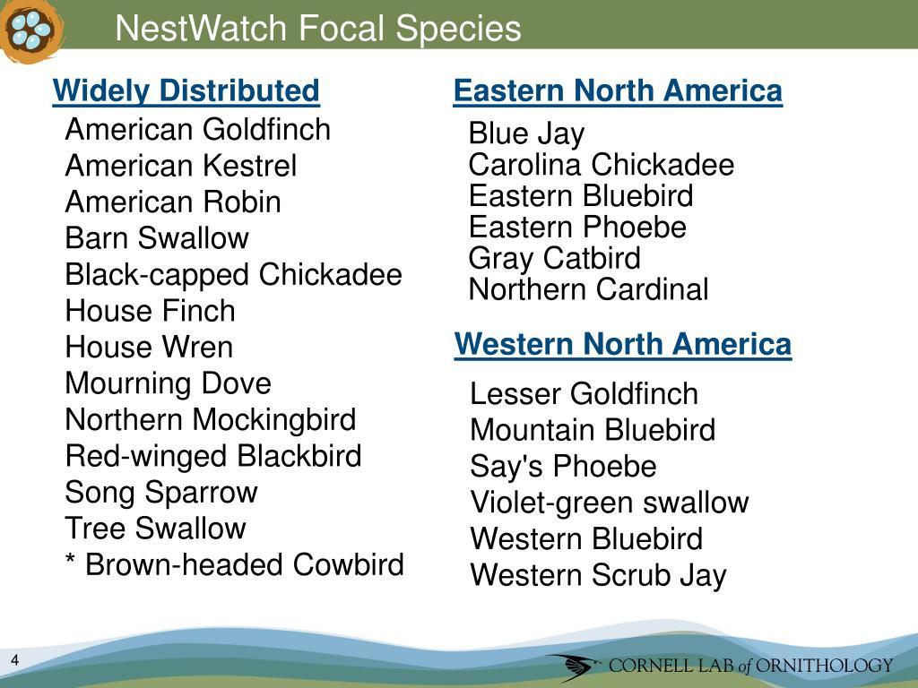 NestWatch Focal Species