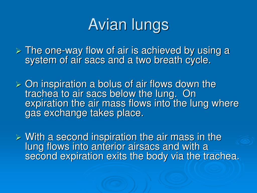 Avian lungs