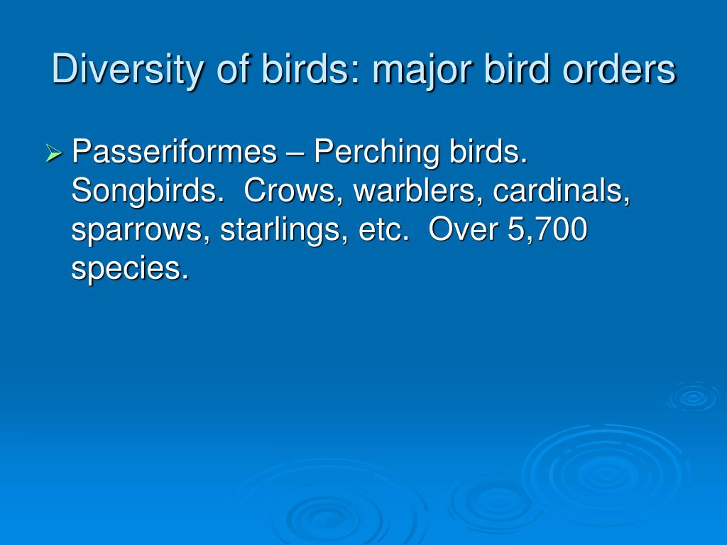 Diversity of birds: major bird orders