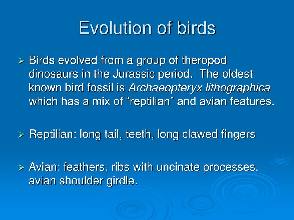 Evolution of birds