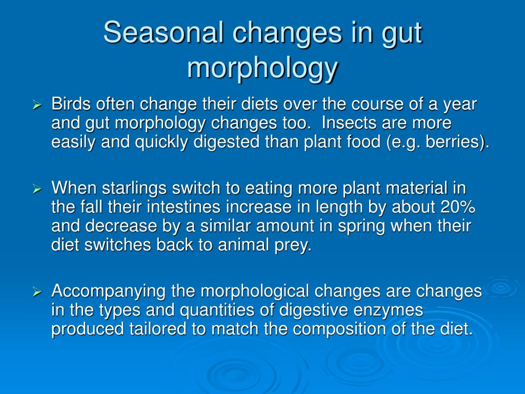 Seasonal changes in gut morphology