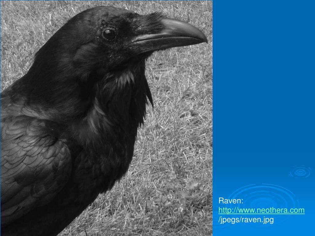 Raven:
