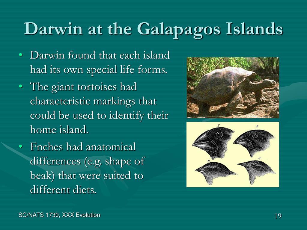 Darwin at the Galapagos Islands