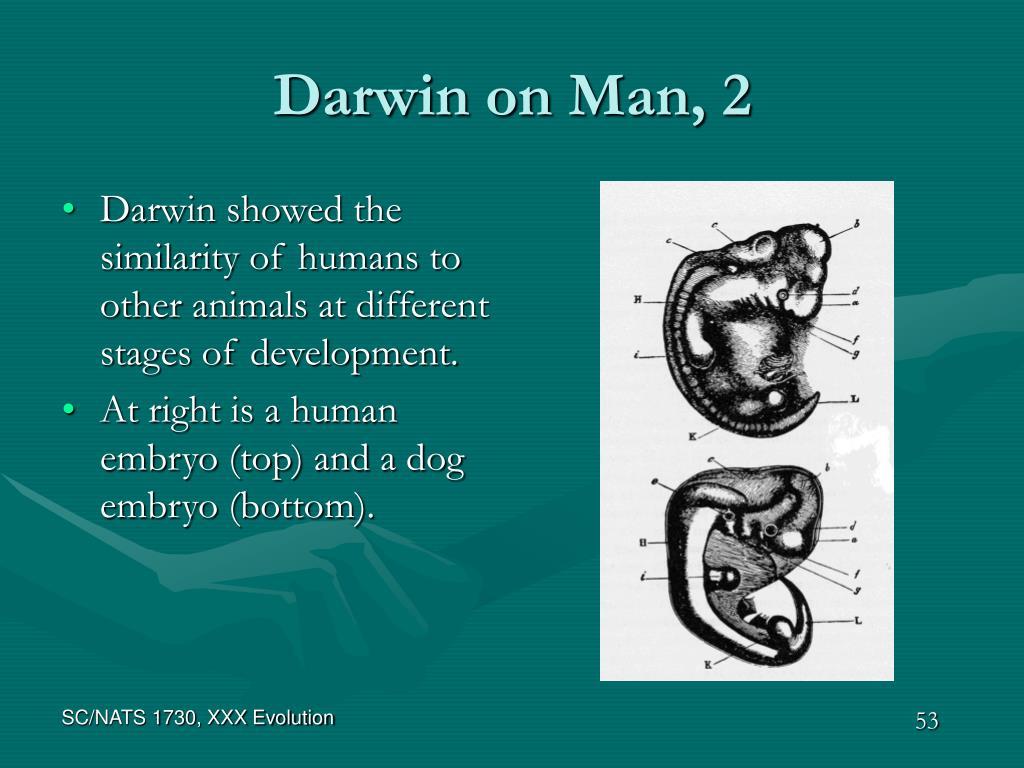 Darwin on Man, 2