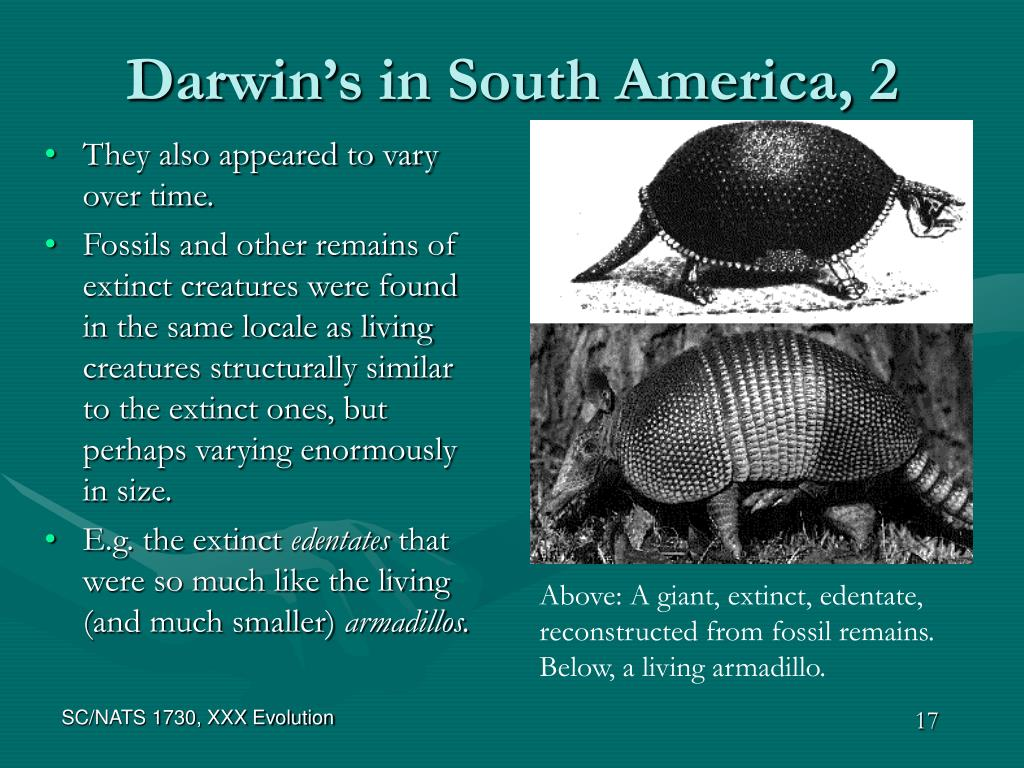 Darwin's in South America, 2