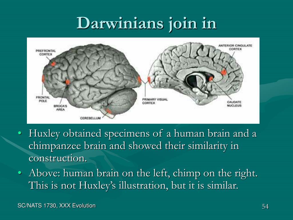 Darwinians join in