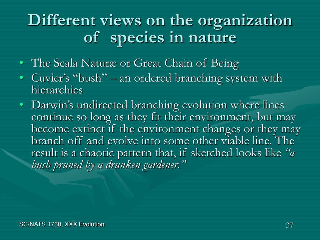 Different views on the organization of  species in nature