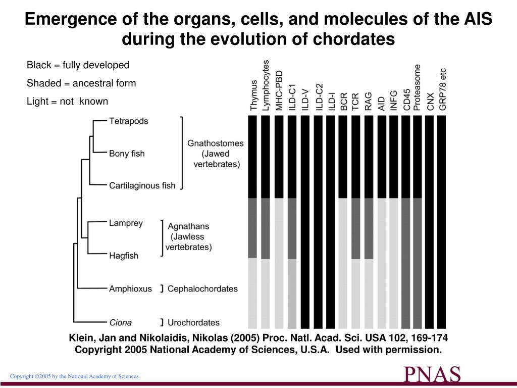 Emergence of the organs, cells, and molecules of the AIS during the evolution of chordates