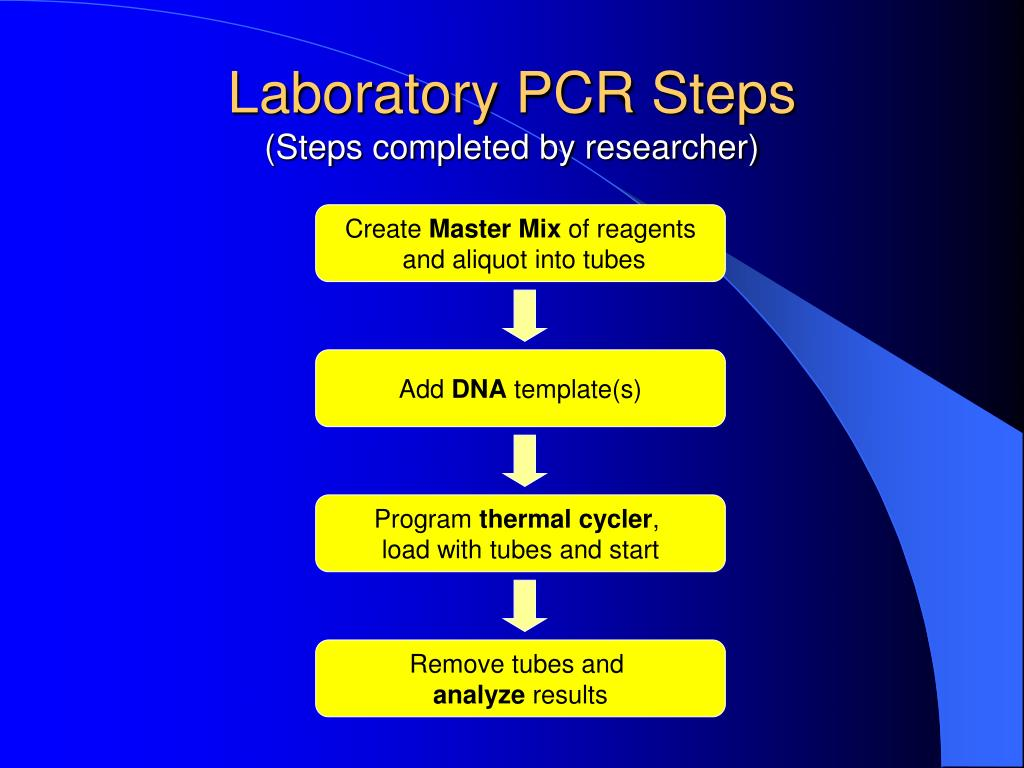 Laboratory PCR Steps