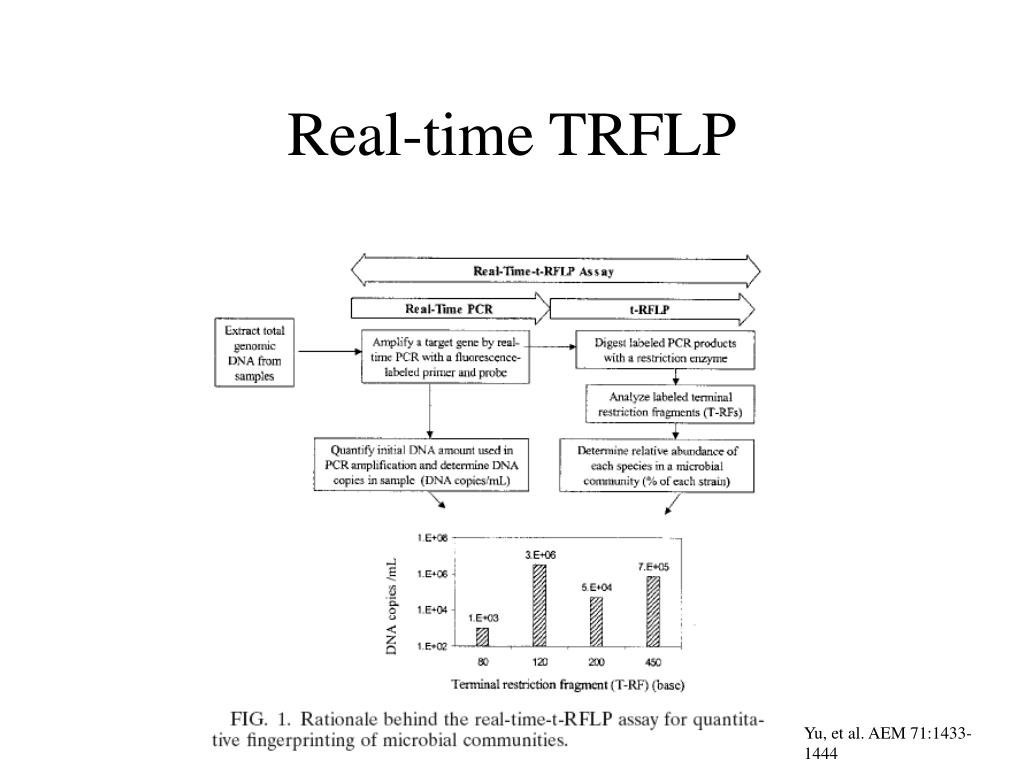 Real-time TRFLP