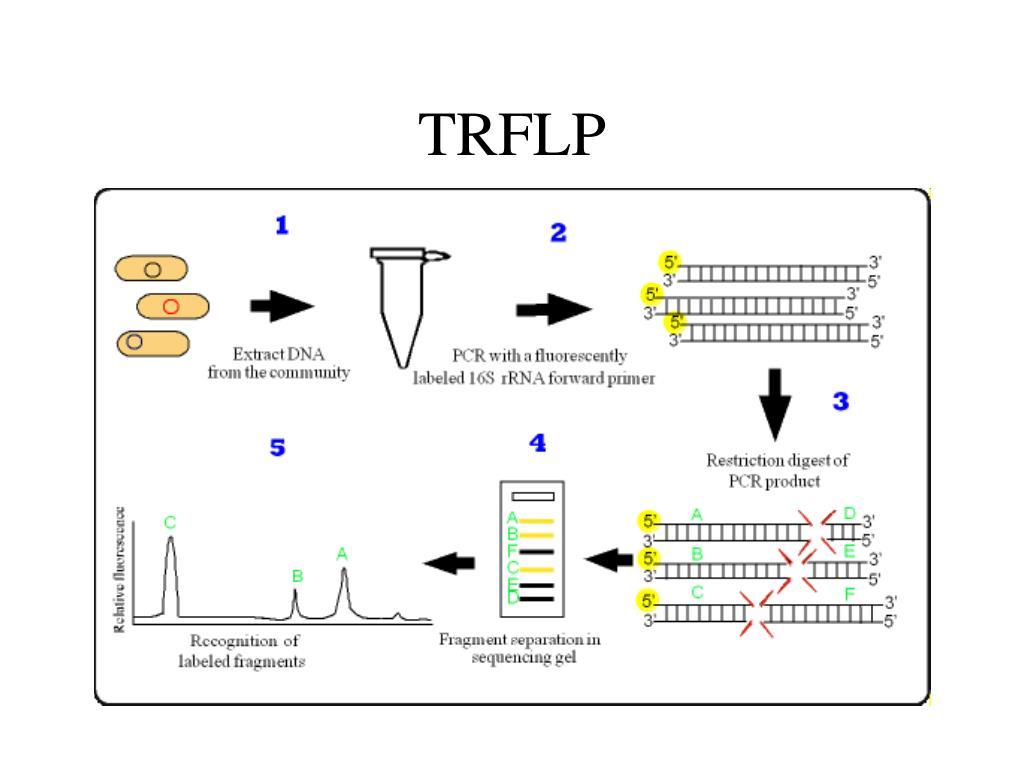 TRFLP
