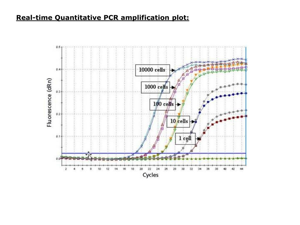 Real-time Quantitative PCR amplification plot: