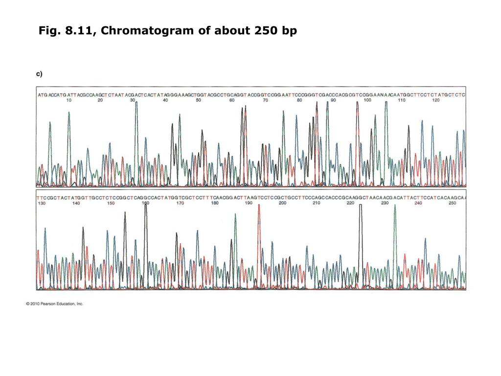 Fig. 8.11, Chromatogram of about 250 bp