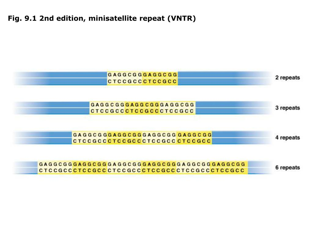 Fig. 9.1 2nd edition, minisatellite repeat (VNTR)