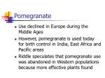 pomegranate28